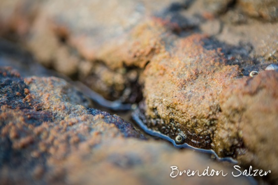 BrendonSalzer_December-2012-21