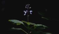 A flower nestled in a ray of light, Hogsback,ZA.